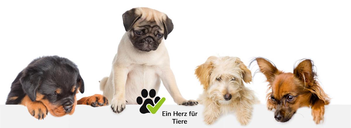 Hotel Graz Puntigam - Hunde gratis Übernachtung