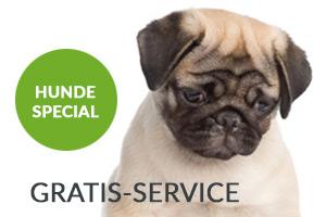 Hunde übernachten im Hotel Greenrooms in Graz völlig gratis